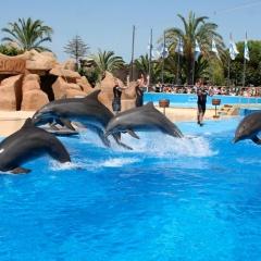 Шоу для для всей семьи в одном из крупнейших в Европе аквапарке – дельфинарии Marineland от туроператора LuxTour