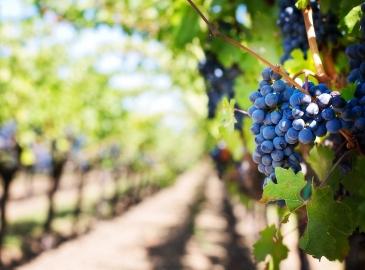 винодельческое предприятие Торрес